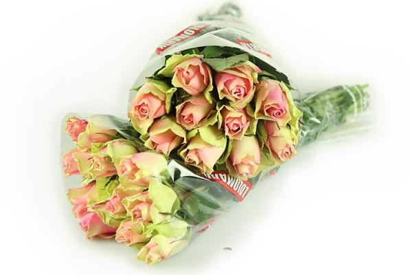 20medium-bellarosa.jpg