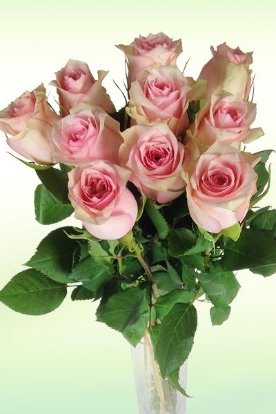 einzelne-rosa-vase.jpg