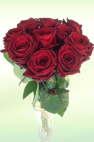 einzelne-rote-vase.jpg