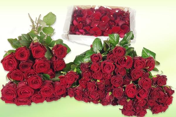 zimmer-rote-rosen.jpg